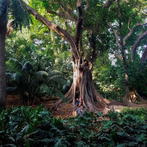 De paseo en el Jardín Botánico de Málaga